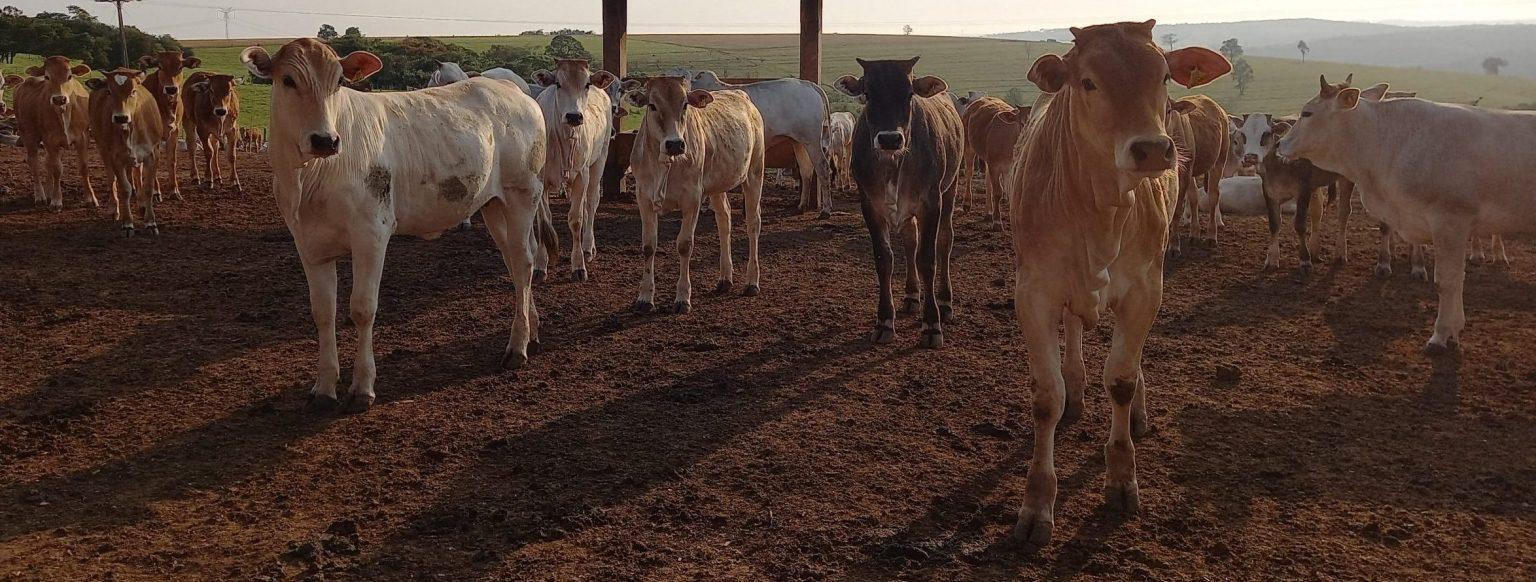 Animal Welfare Produzindo Certo Farm